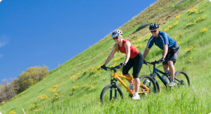 Purchase Bicycle Insurance